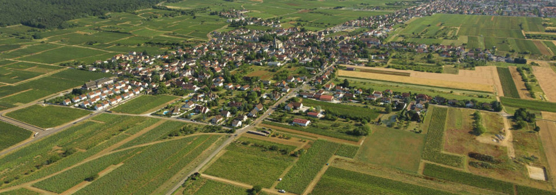 Domaine Guyot