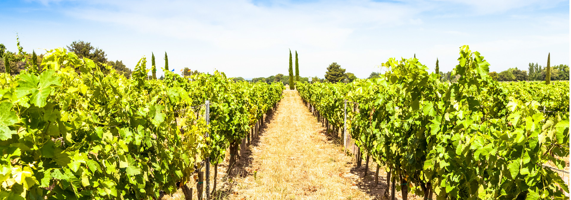 vignoble-provence