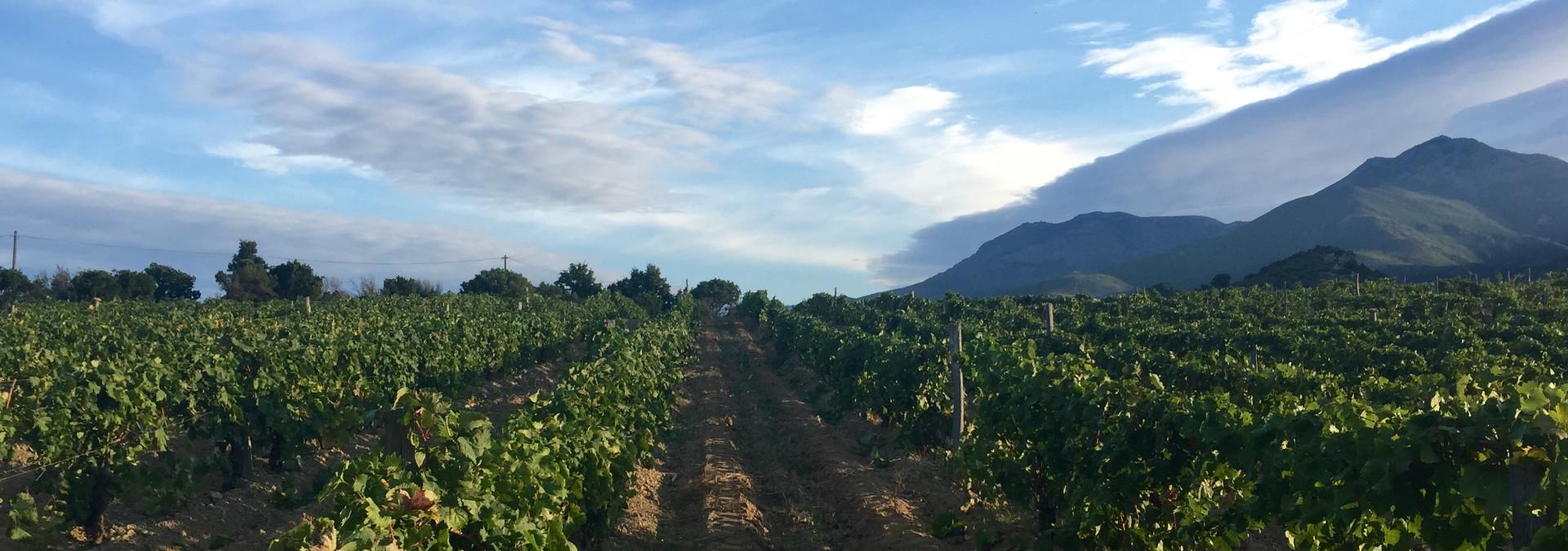 Visite Et Dgustation De Vin En Corse