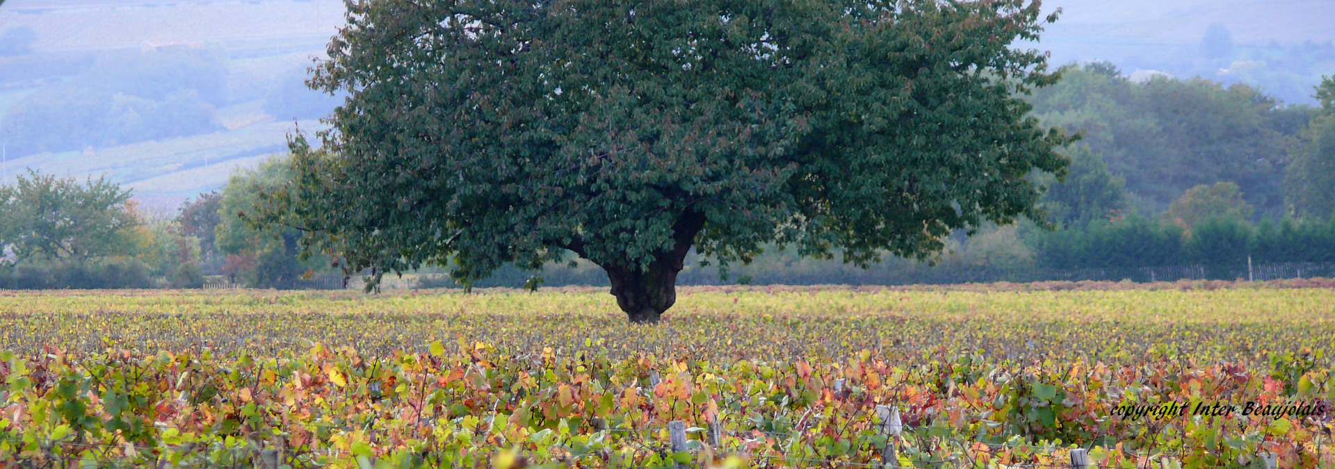 vignoble-beaujolais-2