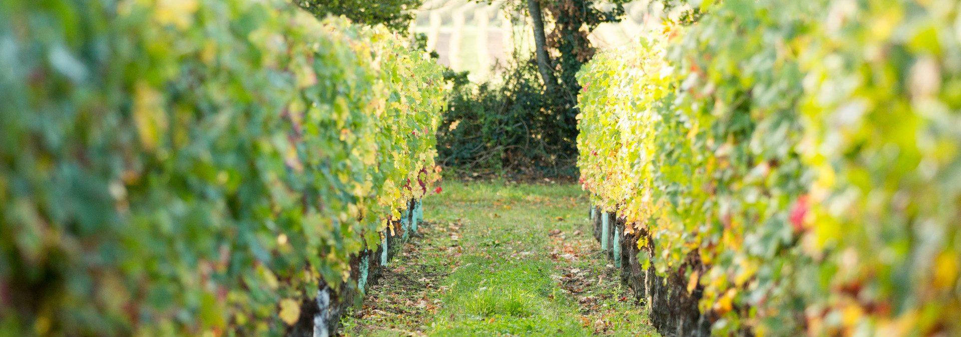 Les vins d'Azel