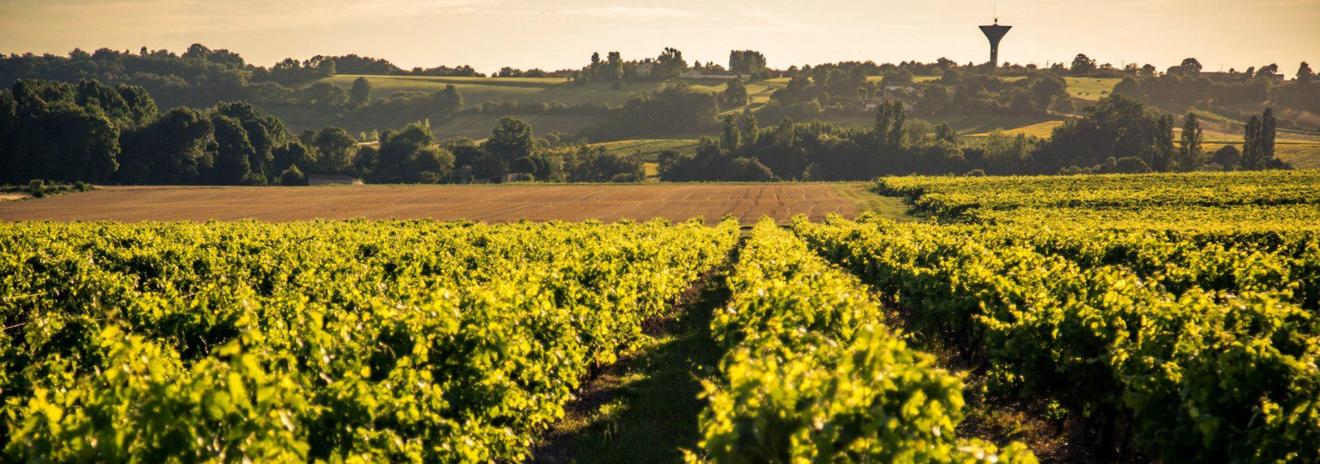Cognac – Pineau des Charentes Raymond Bossis