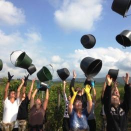 La Famille Albrecht est producteur de Vins d'Alsace depuis 1425 à ORSCHWIHR