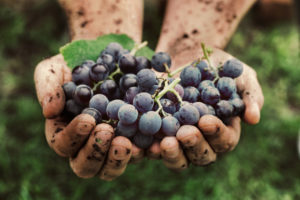 vignerons-indépendants