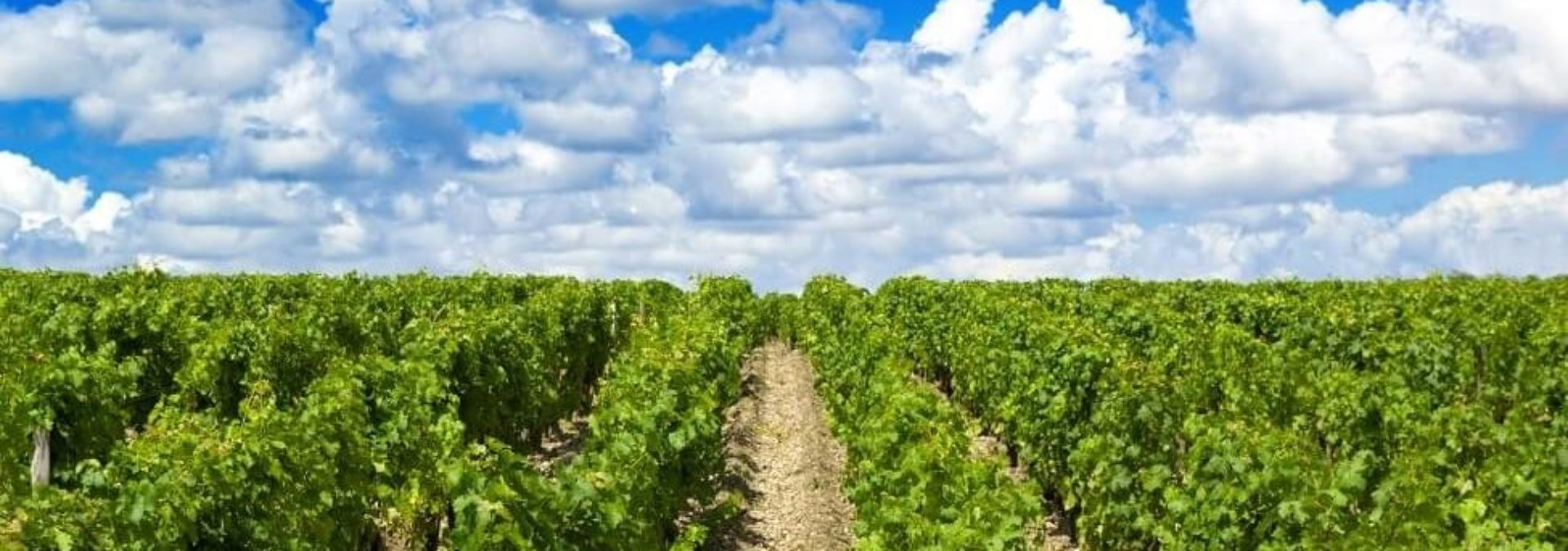 Château Haut-Rian – Les vignes de Coulous