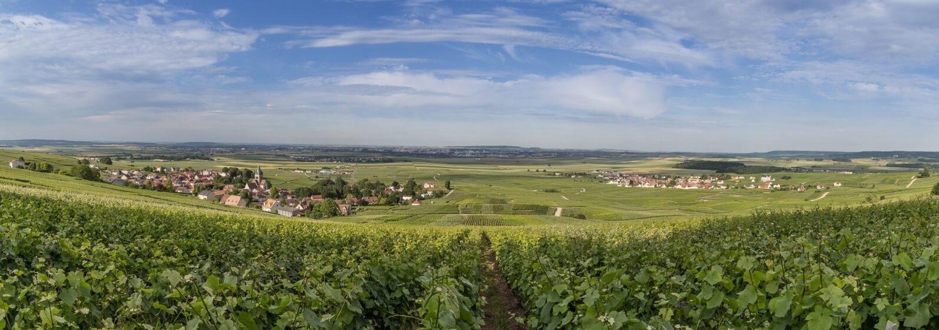 Champagne F. Bergeronneau-Marion