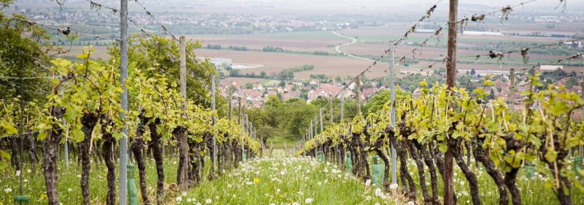 Vins d'Alsace André Hartmann