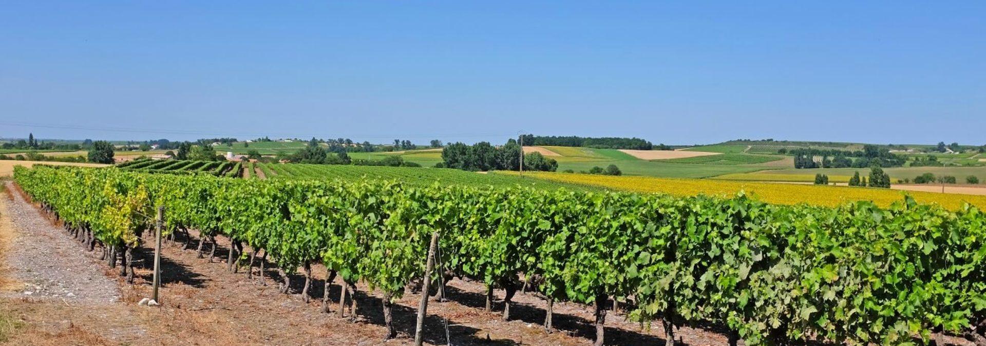 Maison de Cognac et Pineaux des Charentes Normandin-Mercier