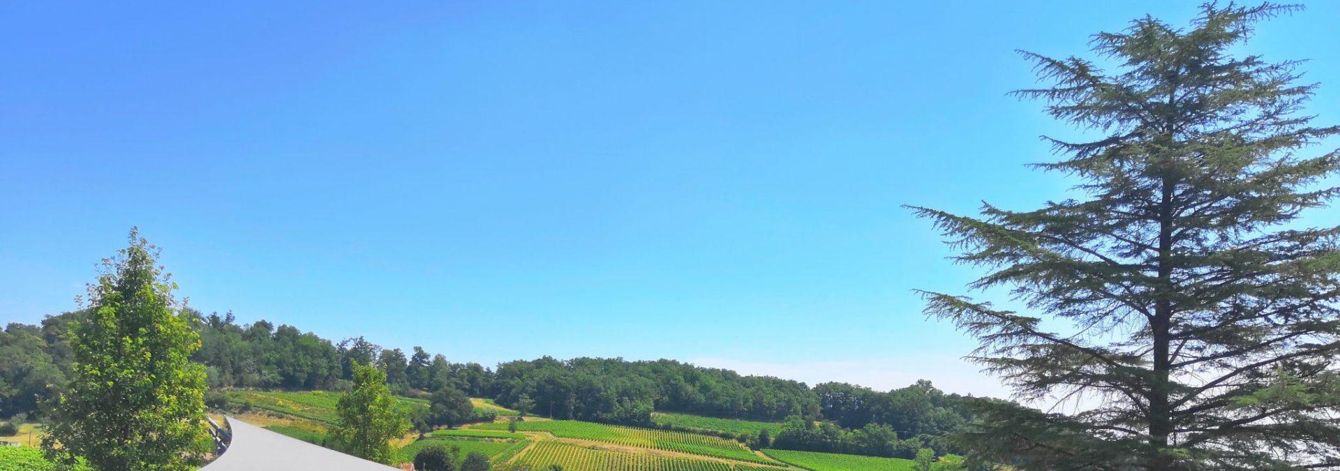 Vignobles Magali & Thibaut Decoster